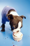 Dogs_birthday_2